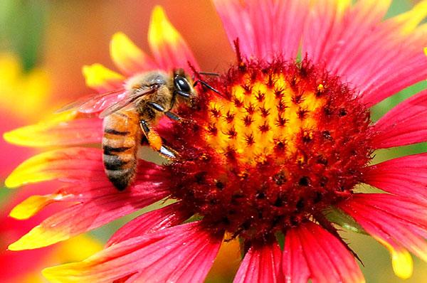 dron-abeja-polinizacion-crisis-importancia